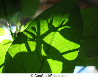 green leaves, sunlight and shadow
