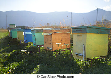 There are many colored hives in the mountains