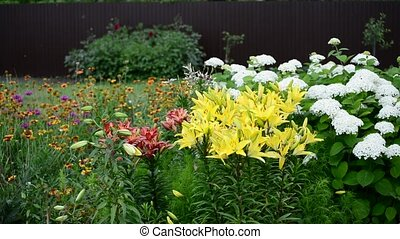 There are many different colors in garden - There are many...