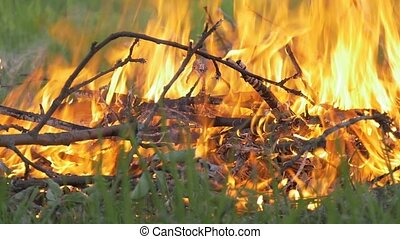There is a big fire in the forest. Slow motion
