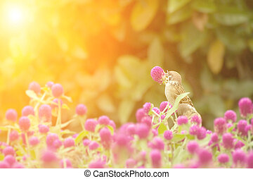 cute sparrow stand on the beautiful purple flowers