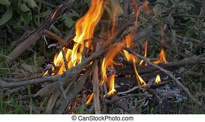 There is a fire in the forest. slow motion