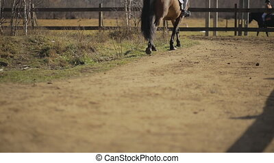 There is the dry ground road in the horse paddock where the domestic animals are walking.