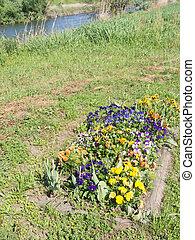 flowers of pansies on the riverside