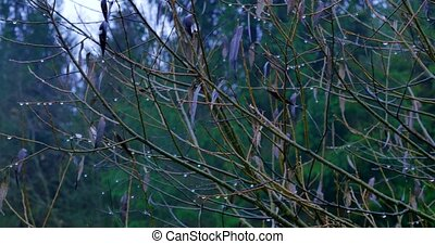 thick branches in the forest, background nature, natural -...