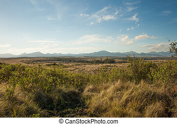 Thick Bush and distant mountains in South Africa