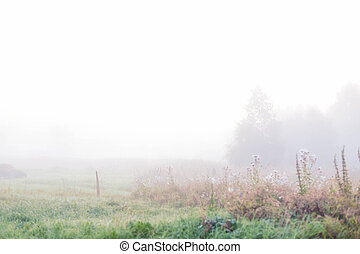 Thick fog. Rural landscape on a early foggy morning in the village.