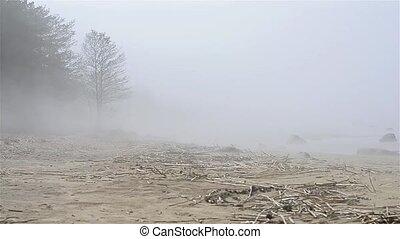 Thick fog spread on sandy beach of Finnish gulf....
