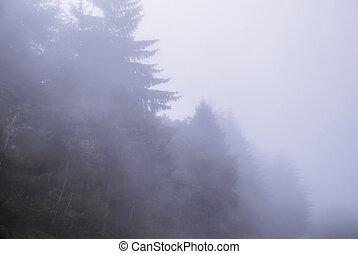 Thick Foggy Trees