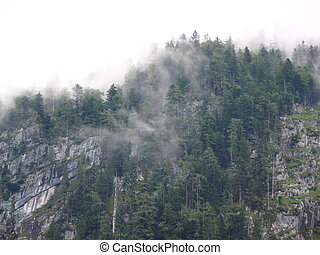 Thick Forest Fog in Mountains after Cool Rainfall