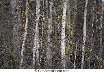 Thick forest
