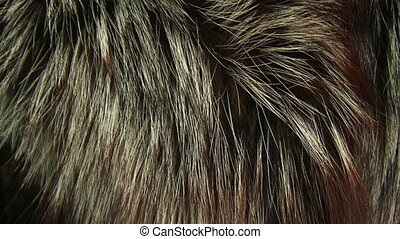 Thick fur - A beautiful thick mink fur. Moving camera.