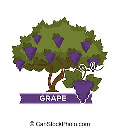 Thick grape bush with ripe juicy heavy clusters