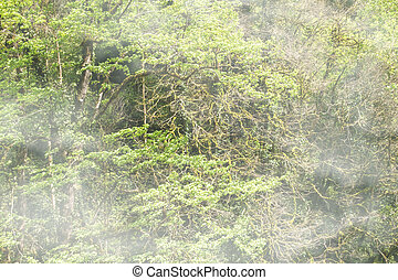 Thick green forest on a hillside in the morning fog.