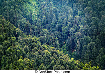 Thick green forest on the hillside. Green colors in the mountain forest.