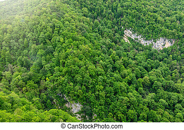 Thick green forest on the hillside. Spring colors in the mountain forest.