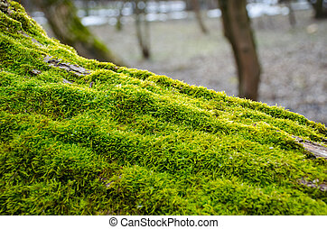 Thick green moss settled on a tree trunk. Forest on a tree trunk.