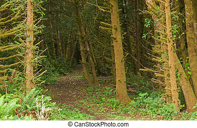 Thick Growth in a Coastal Forest