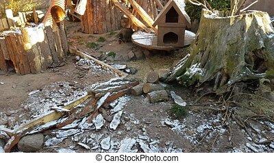Thick raccoons in the aviary - Cute thick predatory mammal...