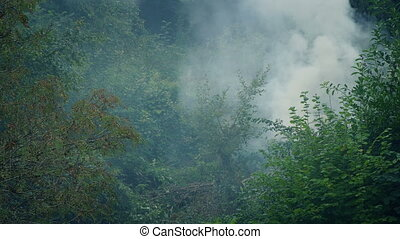 Thick Smoke Rising From Foliage