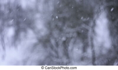 Thick snow falls slowly, winter background close up
