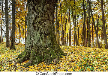 thick tree - Lithuanian landscape come the fall when the...