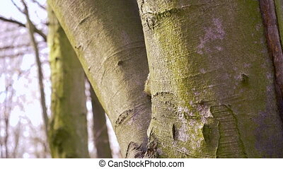 Thick tree trunk closeup