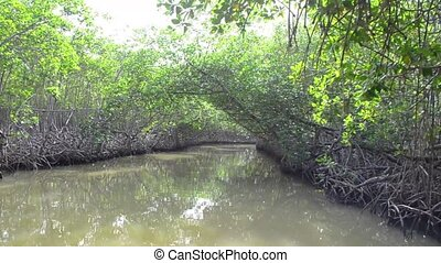 Thickets of mangrove trees in the tidal zone.