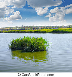 thickets of reeds on the lake