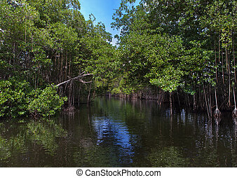 thickets, tropicais, river., jamaica., floresta, mangrove,...
