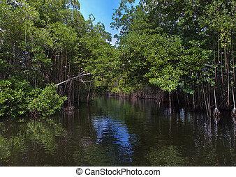 thickets, tropische , river., jamaica., wald, mangrovenbaum,...