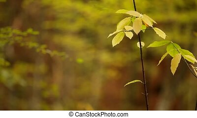 A thin branch with yellow leaves.