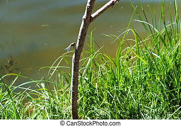 thin branch on the background of the lake, a dragonfly on a twig on the river