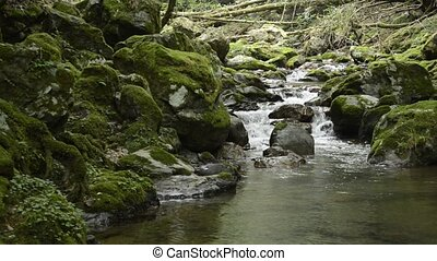 Thin brook flowing ravine between mossy rocks in front of...
