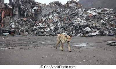 thin  hungry dog looking for food  01