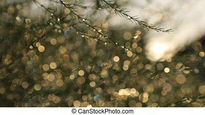 thin spruce branch on a light bokeh background.