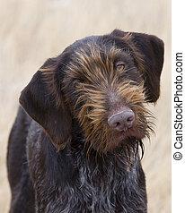 Thinking Dog - Hunting dog looking at his master