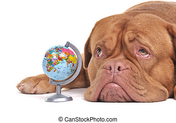 Cute Puppy is thinking of Far-off Destinations