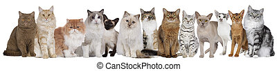 Thirteen cats in a row isolated - Thirteen different cats ...