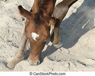 foal is searching for something
