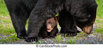 This cub was one of four cubs in the Western North Carolina...