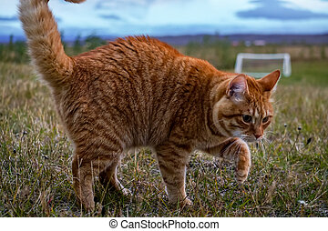 cute Cat I met on a old farm of iceland - This cute Cat I...