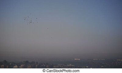This is a beautiful natural video of Flying Flock Of Birds (Pigeons) In Magical Blue Sunset Sky