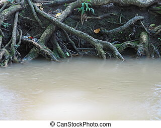 big tree roots and river in tropical rainforest
