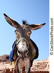 donkey in rock city Petra