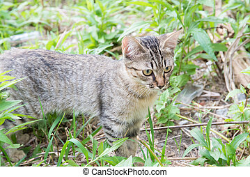 kitten of feral cat - This is a picture of a kitten of feral...