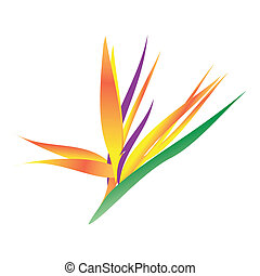 bird of paradise - This is a rasterized drawing bird of...