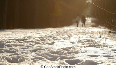 This is a shot of a couple walking in picturesque winter park.