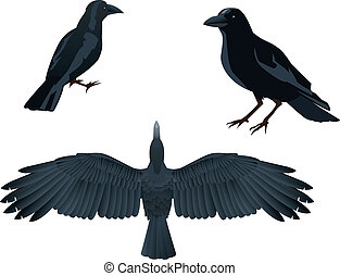 raven - This is a vector illustration of raven