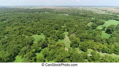 This is an Aerial Pecan Orchard in San Saba Texas